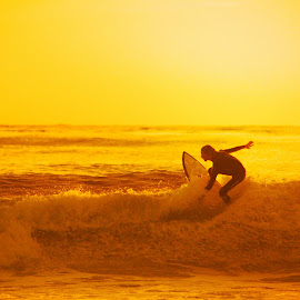 Golden Surfer by Scott Sleek - Sports & Fitness Surfing ( surfer, california, sports, ocean, beach,  )