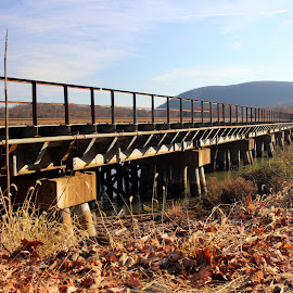 Tracks over the water by Janet Smothers - Buildings & Architecture Bridges & Suspended Structures