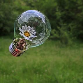 cuida la naturaleza by Miguel Lopez De Haro - Digital Art Things (  )