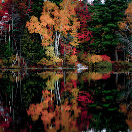 Fall color reflection - Northern Wisconsin by Michael Haagen - Landscapes Forests ( waterscape, colors, fall, reflections, forest,  )