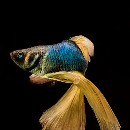 Let's Dances by Arya Suartawan - Animals Fish