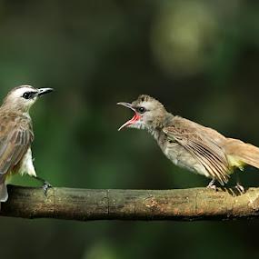 angry by Yan Abimanyu - Animals Birds