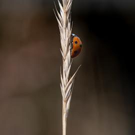 Minimalistic by Nick Vanderperre - Animals Insects & Spiders ( de korrel nog, 2018, website, natuur, a12-ring )
