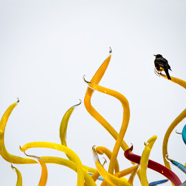 Dale Chihuly Reincarnated by Paulo Peres - Artistic Objects Glass ( bird, chihuly, seattle, art, museum, glass` )
