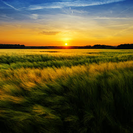 20170521-DSC_0681 by Zsolt Zsigmond - Landscapes Prairies, Meadows & Fields ( non-urban scene, grass, agriculture, yellow, sunlight, landscape, dusk, sun, farm, field, sky, cloud - sky, nature, sunset, outdoors, meadow, sunrise - dawn, summer, rural scene )