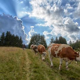 by Stanislav Horacek - Landscapes Prairies, Meadows & Fields
