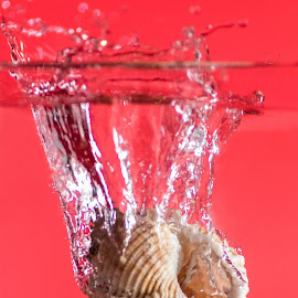 Splash by Davide Dilevrano - Abstract Water Drops & Splashes (  )