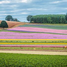 Silverfalls Seed Company by Chris Bartell - Landscapes Prairies, Meadows & Fields ( field, oregon, seed, flowers )