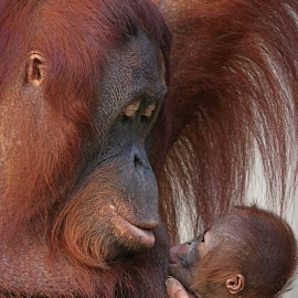 Mother love by Tazi Brown - Animals Other Mammals
