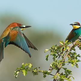 Back home by Alberto Carati - Animals Birds