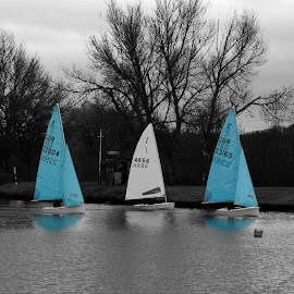 Sailing by Phil Burke - Sports & Fitness Other Sports ( water, sailing boat, tree, sail, boat )