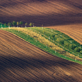 Ribbon by Josef Hasík - Landscapes Prairies, Meadows & Fields ( grass, green, wave, trees, brown, yellow )
