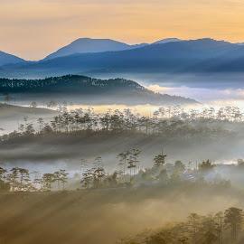 Rays by Trang Võ - Uncategorized All Uncategorized ( mountain, fog, pine, sunlight, rays )