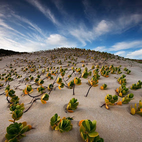 Sun seekers by Bruce Meaker - Landscapes Beaches