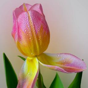 by Irena Gedgaudiene - Flowers Flower Buds (  )