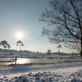 Winter scene by Henk Verheyen - Landscapes Weather ( st walrick, winter, nederland, st. walrck, cold, snow, sneeuw, forest, landschap, netherlands )