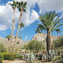 Paradise by Anne Johnson - City,  Street & Park  Vistas ( palm tree, mountains, vacation, vista, resort )