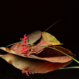 Ode to Autumn by Prasanta Das - Nature Up Close Leaves & Grasses ( ode, autumn, yellow, leaves )