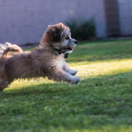 run malley run by Joe Faherty - Animals - Dogs Puppies