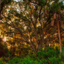 by Nancie Rowan - Landscapes Forests