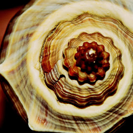 Rhythm by Prasanta Das - Nature Up Close Other Natural Objects ( sea shell, spiral, perfect )