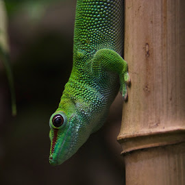 by Steven Aicinena - Animals Reptiles