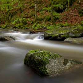 by Siniša Almaši - Nature Up Close Water ( water, up close, stream, forest, landscape, woods, depth, nature, trees, view, stones, light, rocks, river )