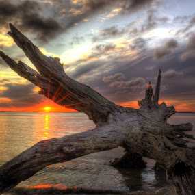 Driftwood Sunset by Greg Mimbs - Landscapes Waterscapes ( clouds, water, sand, erosion, waves, driftwood beach, georgia, ocean, live oaks, sky, sunset, jekyll island, barier island, , landscape, beach )