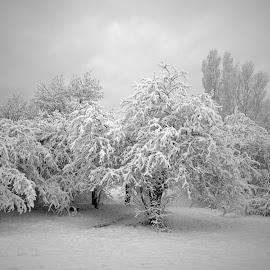 by Estislav Ploshtakov - Nature Up Close Trees & Bushes