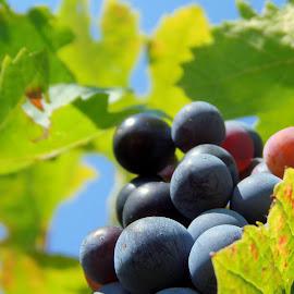 by Eva Doe (Antonija Kodžoman) - Food & Drink Fruits & Vegetables