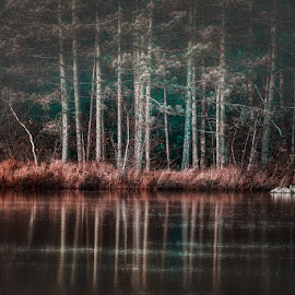 Being different by Dragan Milovanovic - Landscapes Forests