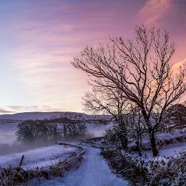 Morning Winter Wonderland by Sandra Cockayne - Landscapes Weather ( winter landscape, dawn, winter, wonderland, winter wonderland, snow, sandra cockayne, sandi cockayne, snowy, morning )