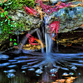 Annies Falls by Keith Sutherland - Nature Up Close Water