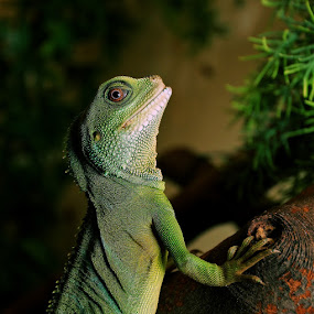 i am watching you by Steve Isp - Animals Reptiles