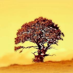 Misty Morning by Craig Skinner - Uncategorized All Uncategorized ( law scotland tree mist landscape colour )