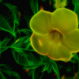 Tinkerbells World by Dave Walters - Digital Art Things ( nature, abstract, lumix fz2500, colors, digital art,  )