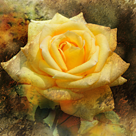 SHINE by Carmen Velcic - Digital Art Abstract ( abstract, roses, shine, yellow, flowers, digital )