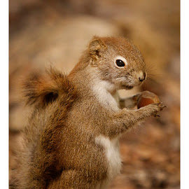Squirrel by Leo Coste - Animals Other