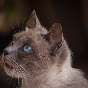 My Cat by Rui Medeiros - Animals - Cats Portraits ( animals, cat,  )