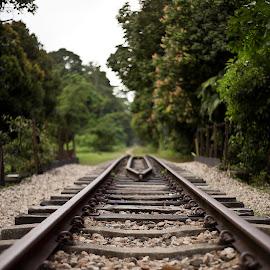 Abandoned track by Soumyajit Sarcar - Transportation Railway Tracks ( #ktmsingapore, #railwaytrack, #leadingline, #bukittimahreserve, #abandoned,  )