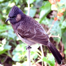 the wait by SANGEETA MENA  - Animals Birds