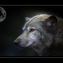 The wolf and the moon by Fiona Etkin - Digital Art Animals ( mystic, dreamy, moon, nature, wolf, digital art, portrait, animal,  )