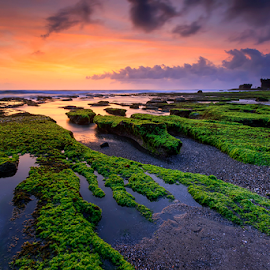 Sunset at Tanah Lot Temple by Yudik Pradnyana - Landscapes Sunsets & Sunrises ( bali, green, sunset, landscapes )