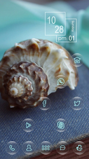 Beautiful exotic conch theme - screenshot