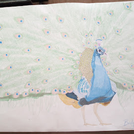 Peacock by Reagan Muriuki - Drawing All Drawing