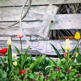by Winnie Chrzanowski - Digital Art Things ( mackinac island, bike wheel, tulips, manipulation )
