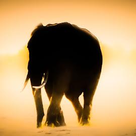 Elephant, Kariba by Ian Harvey-Brown - Digital Art Animals
