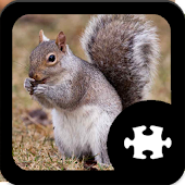 Game Squirrel Puzzle apk for kindle fire