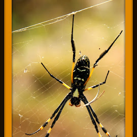 My home  by Catherine Volker - Nature Up Close Webs