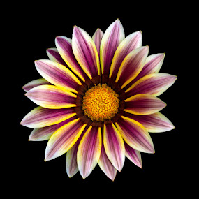 Almost Perfect by Melanie Kern-Favilla - Nature Up Close Flowers - 2011-2013 ( purple, color, yellow, flower, floral )